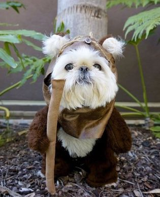 ewok, star wars, may 4th, the force, terrier, funny, humor