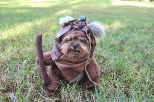 Star Wars Dog 3